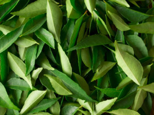 Indian-ingredient-substitutions-curry leaves