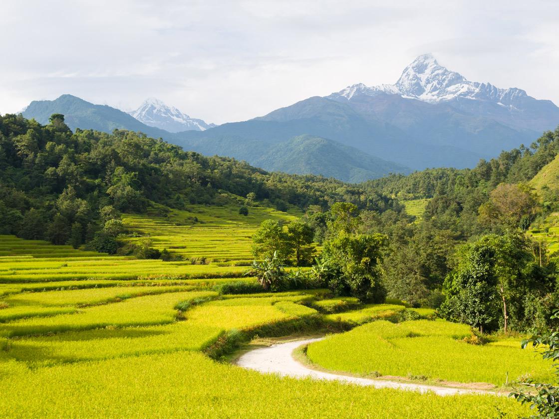 Indian vegetarian diet basmati rice Himalayan foothills