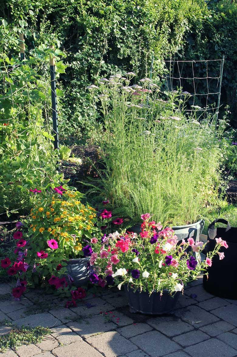 Organic Vegetable Garden