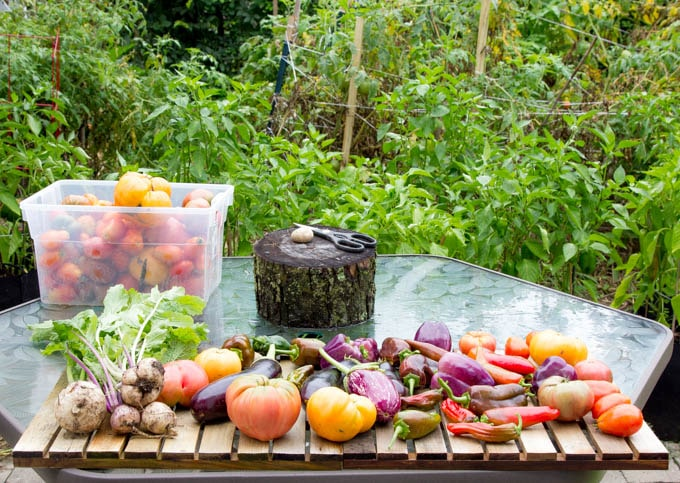 traditional ratatouille vegetables in garden