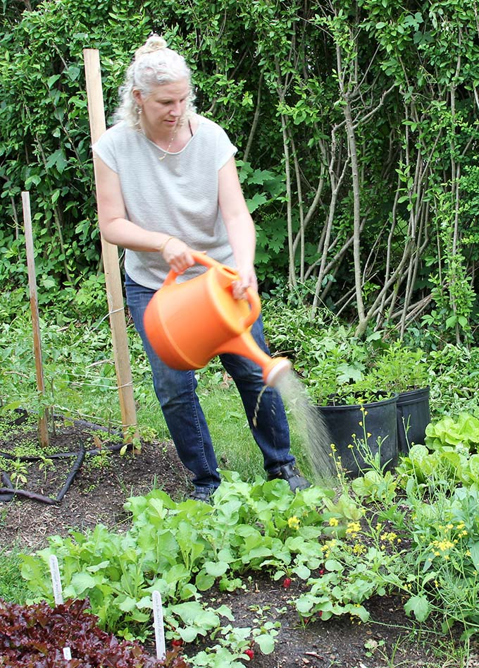 working in the backyard garden