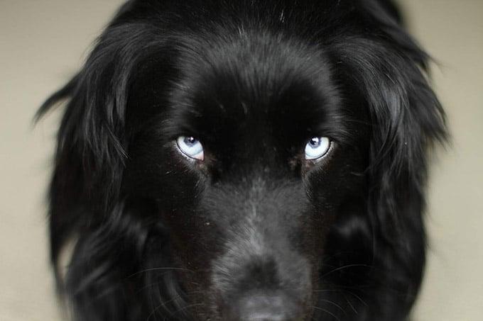 John chester's dog todd